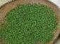 鸦河贡茶高山茶绿茶